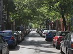 Summer canopy on Drolet street