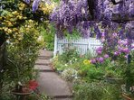 The beautiful courtyard  wisteria in October