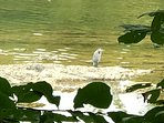 Heron and many other birds are often seen on the river bank