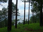 The view of Umiam Lake from our Lake View Farm in Shillong.