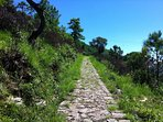 The David Scott Trail in Mawphlang about 40 mins drive from Shillong.