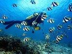 Diving in Similian Islands