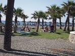 Bred strand med både sand och palmer