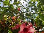 Lush vegetation abounds