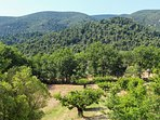 Summer View of Cherry Orchard and Luberon from Villa