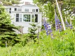 Eagle Cliff with summer lupines.