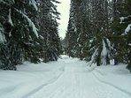 Marshall Cabin-Marshall Cabin Ski in path in winter