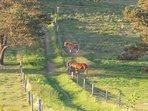 Tibirke Hills (0.5-1 km), horses grazing