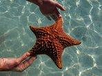 Starfish on Stocking Island