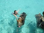 See the famous swimming pigs on a Cays trip