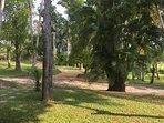Cinnamon plantation and garden