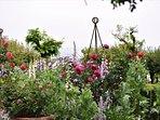 Our English garden on a spring morning