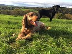 This is a great walk for dogs and their owners.Views of ancient hill forts and woodland.
