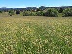 Prairie en fleurs dans le hameau la vie neuve à Septmoncel