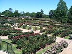 Local Attraction: Texas Rose Garden