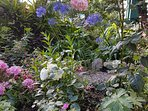 Roses, agapanthas and a pond in your garden