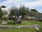 Jardín tranquilo en zona muy bien ubicada y tranquila Ubicación ideal y próxima a la playa y centro
