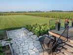 Vineyard Vista