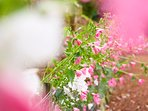 Summertime flowers in the gardens