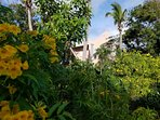 Set in a naturalistic tropical garden