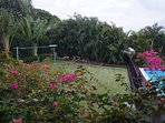 Tropical landscaping in our backyard