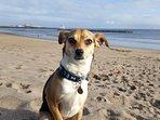 Charlie the dog enjoying the mile long sandy beach