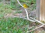 migrating bird April