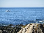 Watch lobster boats as they catch your dinner.