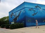 South Padre Island Convention center Texas 78597 Wyland art