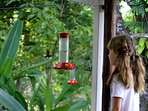 Stay still and get close to the hummingbirds to appreciate their magic