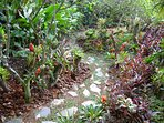 Collection of bromeliads, anthuriums, orchids and heliconias among other tropical plants.