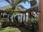 Fishing galore in Cabo! Great tuna catch of the day on this trip!