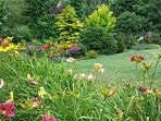 Summer Lily Garden