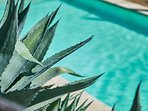 Pool impression with agave