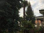 Las Hazas tienen muchos árboles singulares: cedros del Atlas, abetos albares, palmeras, kiwis...