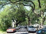 We live on a historic 300 year old oak tree lined street. It's glorious all year round.