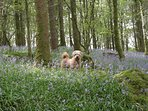 Dog friendly enjoy the local walks from the doorstep. 2 dogs accepted on request.