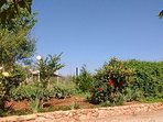 Nuestro jardín, cuidado con mucho mimo