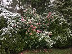 snow dusted garden