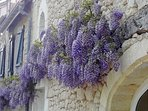Come and stay when the Wisteria is gloriously in bloom!