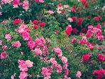 Il Cortile delle Rose