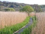 Marshland nature reserve adjacent to chalet