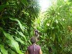 Balade en forêt tropicale à la Dominique. Excursion à terre pendant une croisière.