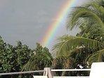 A rainbow peering through the maho hibiscus and the palm tree at Villa Gardenia