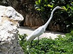 Heron, a frequent visitor to the Villa