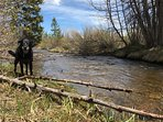 Taken just steps from the home, whether you have two legs, or four, this is a great spot to enjoy Colorado in style.