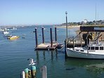 Chatham - harbor - fishing fleet from fish pier - see harbor seals