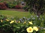 Garden walks with fruit, flowers and herbs in quiet neighborhood with no coqui frogs