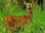 Wildlife of the Sattal forest