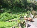 Rear Garden sun trap and dining area